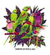 Parrots of India and Asia